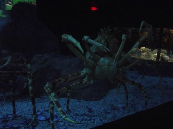 aquarium 11