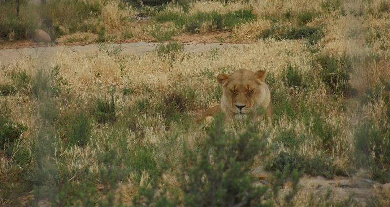safari 13
