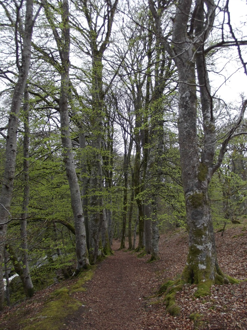 blair atholl woods