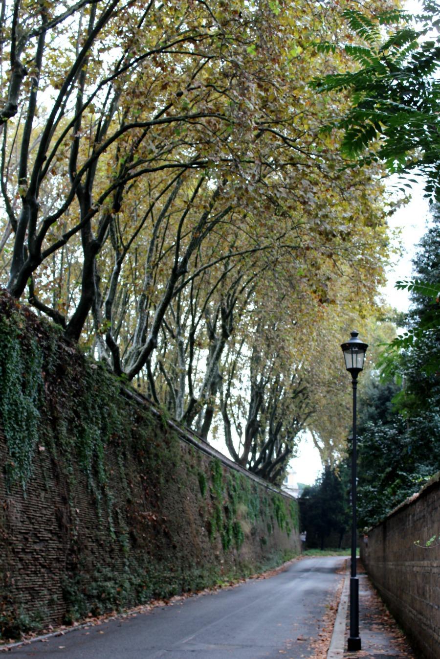 trastevere street trees