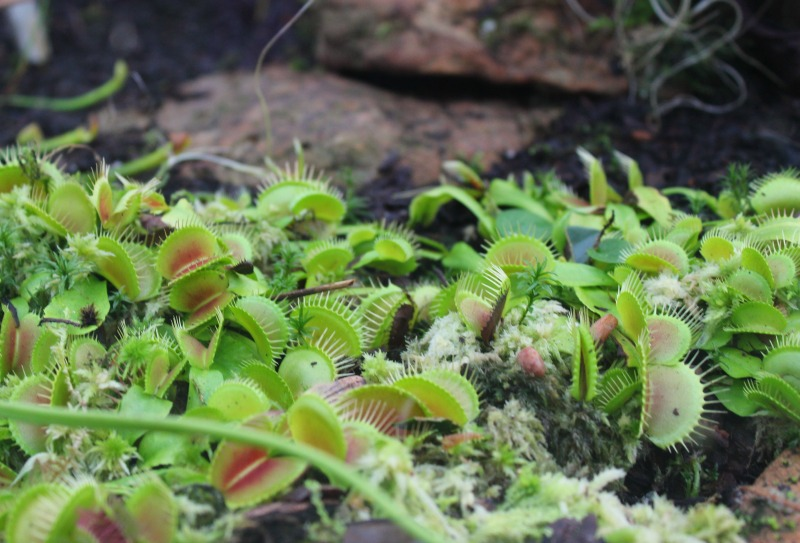 edinburgh botanics 12