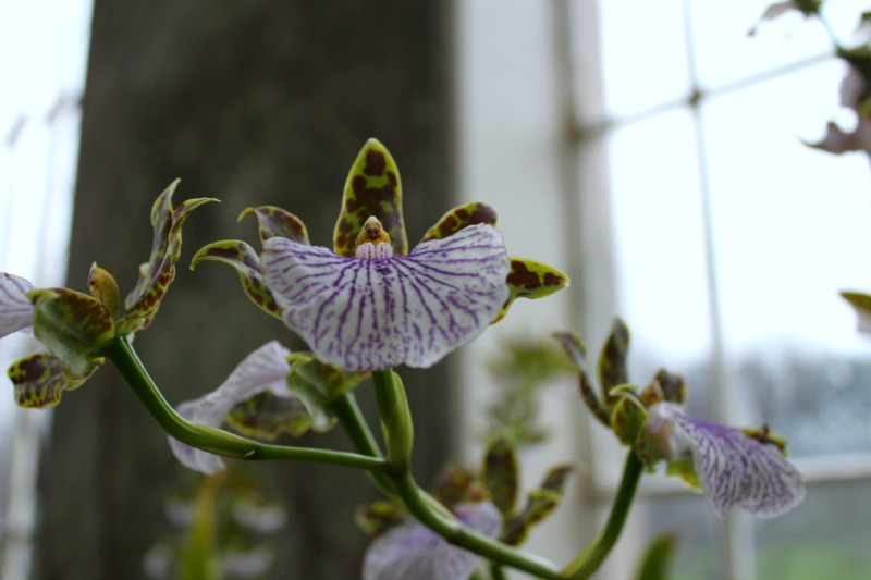 edinburgh botanics 3