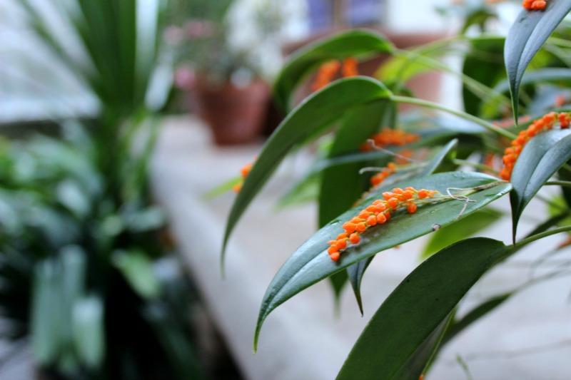 edinburgh botanics 4