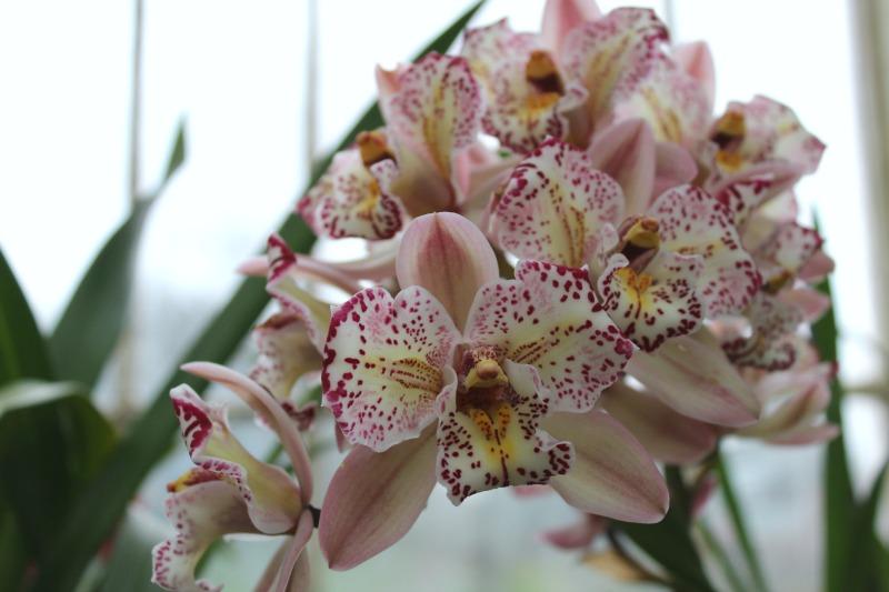 edinburgh botanics 6