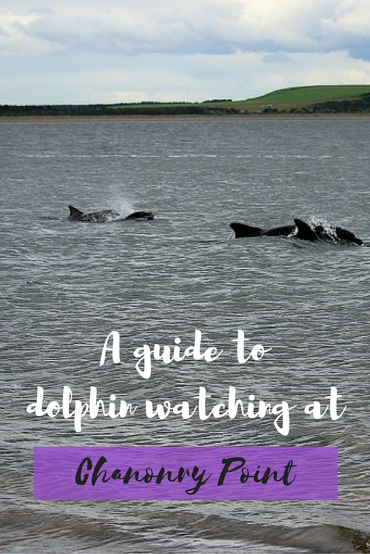 A guide to dolphin watching Pinterest