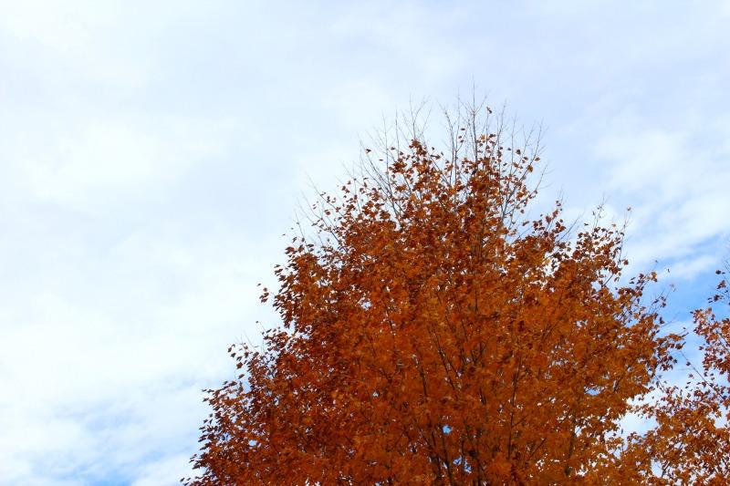 autumn-in-canada-15