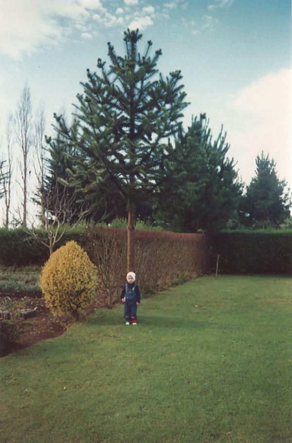 camila arbre