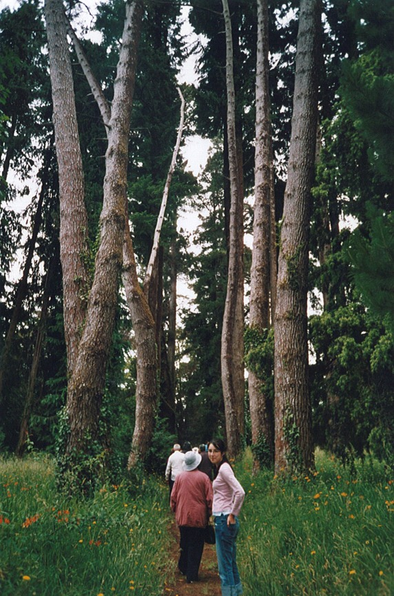 san ramon forest