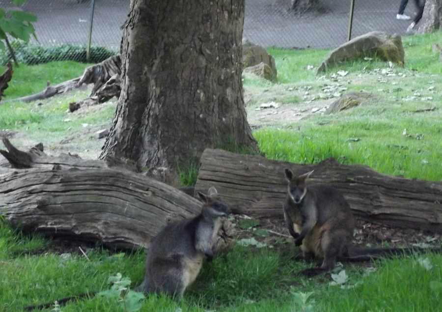 edinburgh zoo nights 7