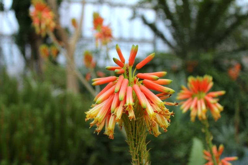 edinburgh botanics 11