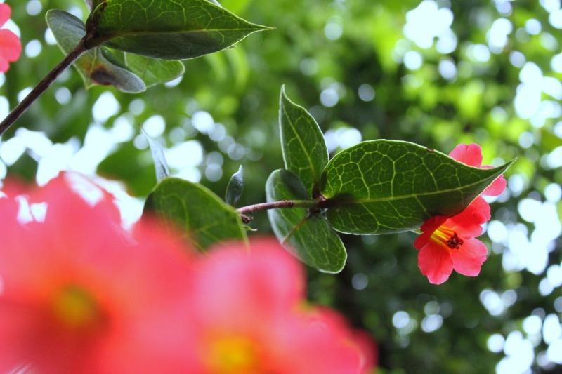 edinburgh botanics 13