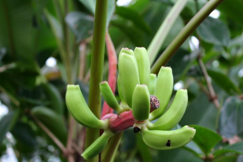 edinburgh botanics 14