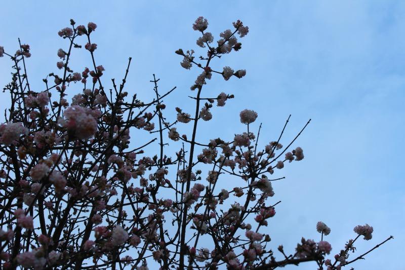 edinburgh botanics 17