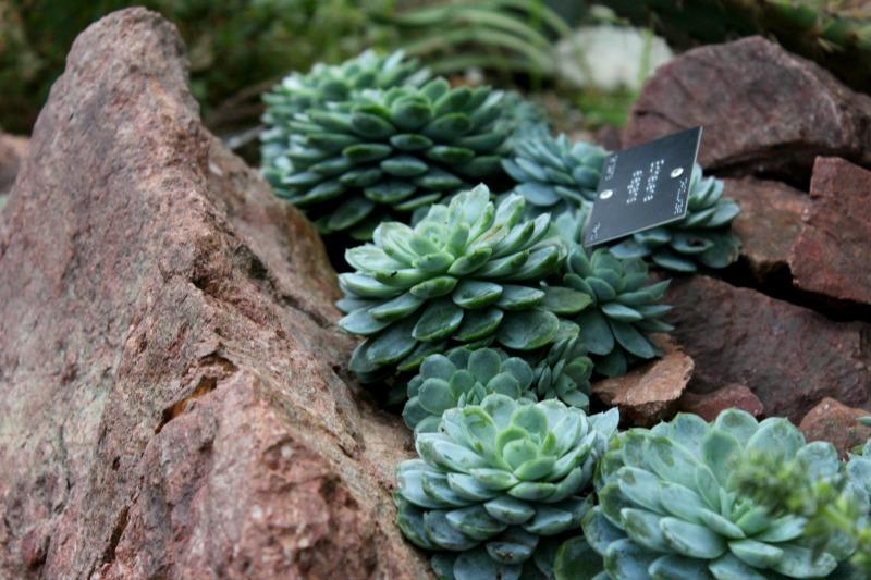 edinburgh botanics 9