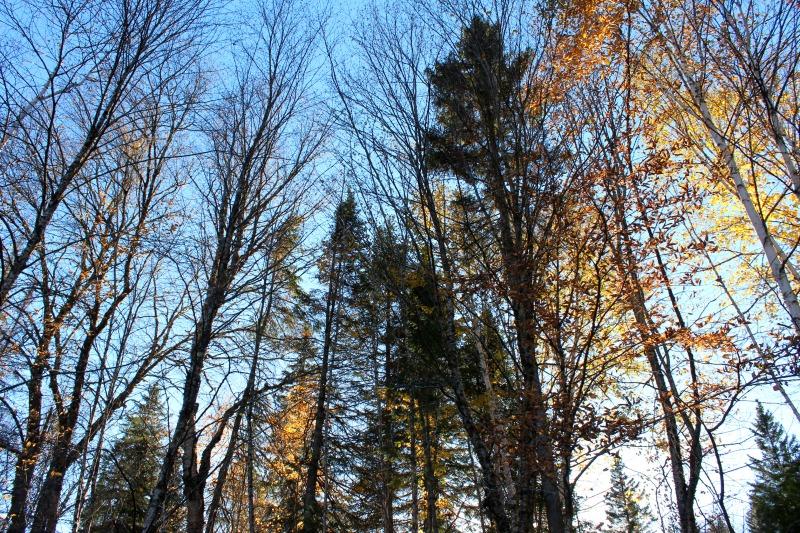 autumn-in-canada-16