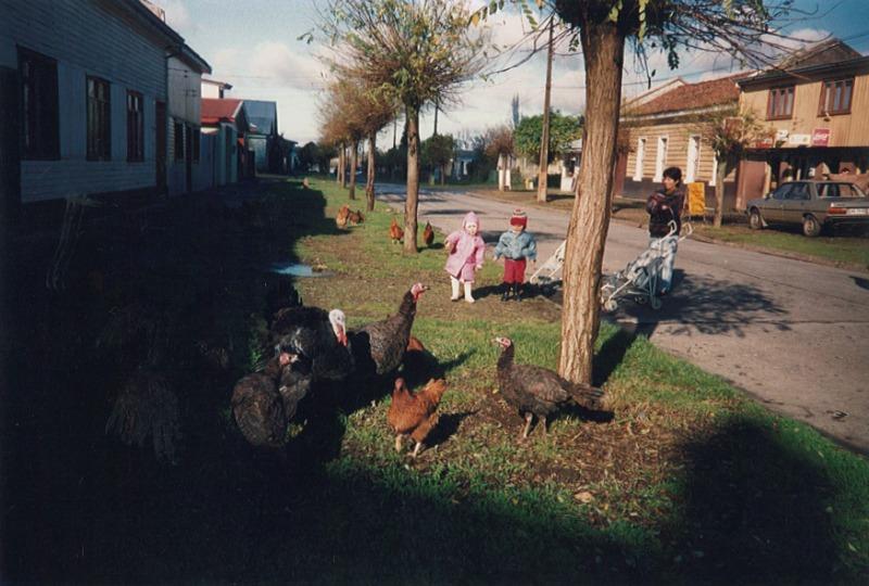 camila poules