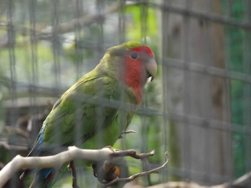 world of birds 4